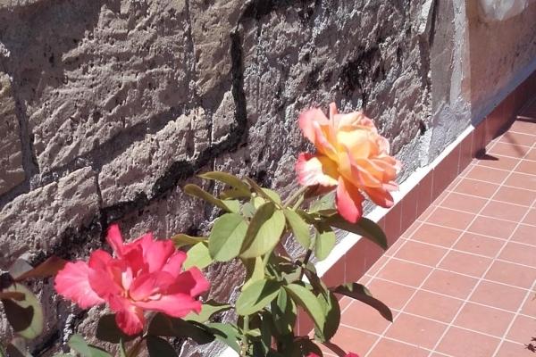 rose24943511A-34E1-AC02-E9D5-ECFEF2F61D8E.jpg